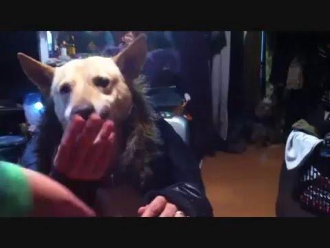 犬の二人羽織