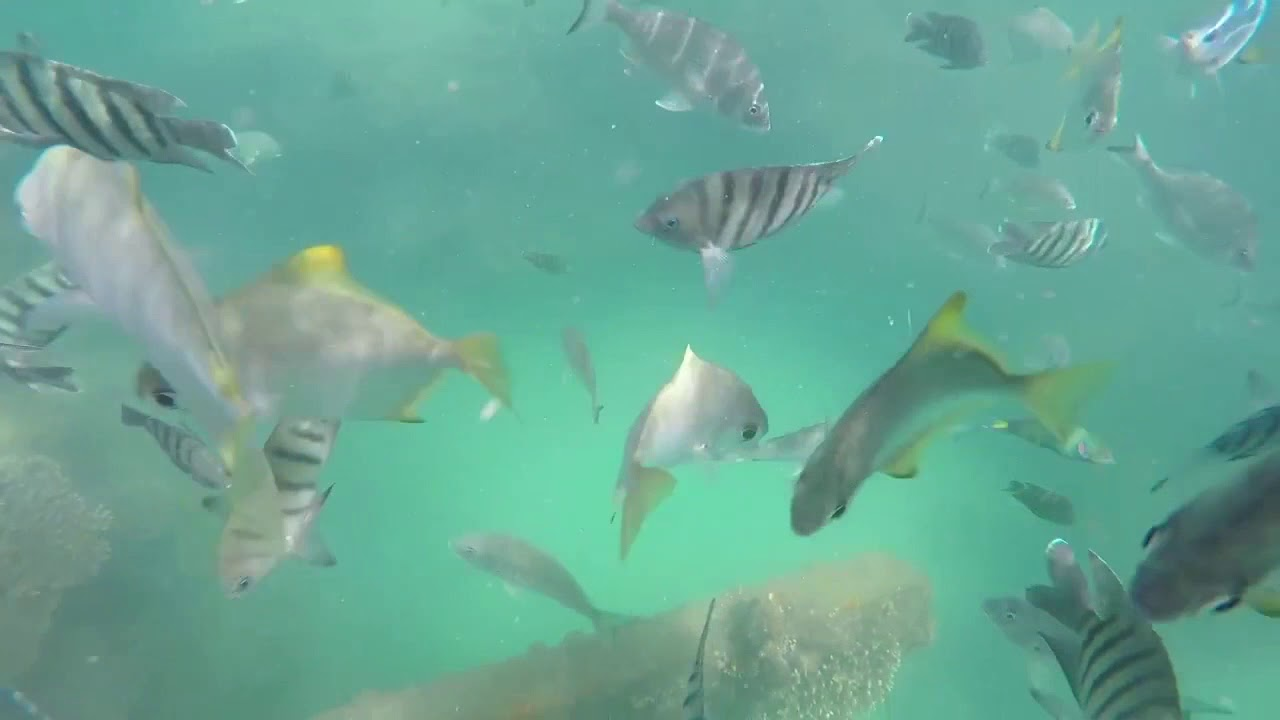 video Moreton Island Get Wrecked 2 Day Tour