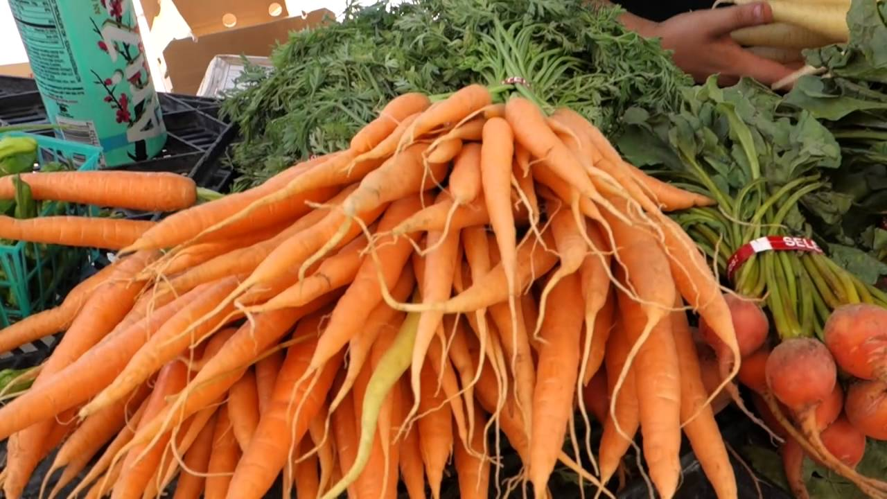 A Brief History of Carrots - YouTube