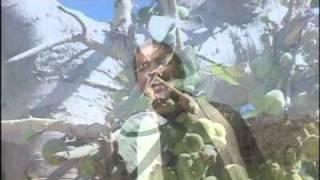 Thandi Hawa Thando Pani [Full Song] Thandi Hawa Thandi Pani