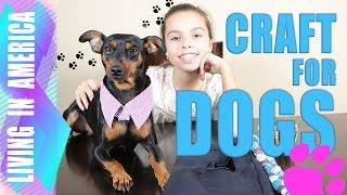 DIY EASY DOG CRAFT SERIES