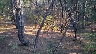Федоровский лес. Донецкая область