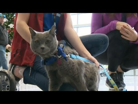 Calgary airport critters help travelers to cool their jets