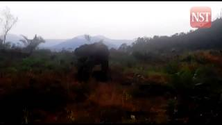 Villagers not afraid of elephants despite recent attacks