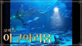 코엑스 아쿠아리움에서 상어가족과 물고기 친구들 / Sh…