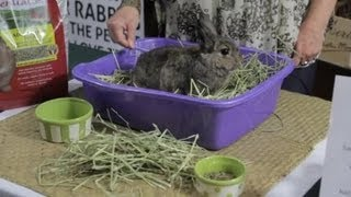 Young Rabbit Care : Rabbit Care