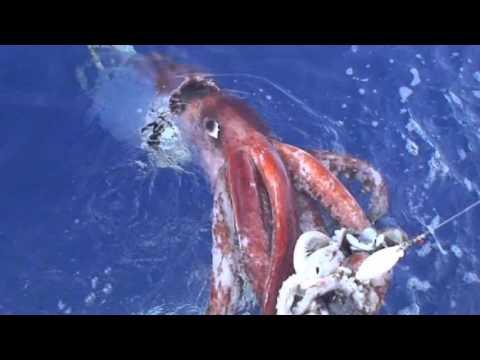 Ecosystem: Open Ocean