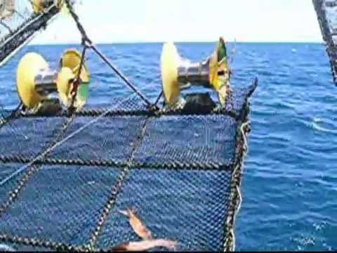 Thumbnail: Squid Fishing (commercial distant-water jigger), South Atlantic. Pesca de calamar en el Atlantico