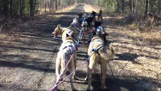 Muddy Paws dog sled ride in New Hampshire