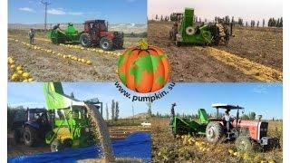 Уборка тыквы на семена,  тыквоуборочный комбайн(Уборка тыквы на семена, тыквоуборочный комбайн http://pumpkin.su Машина используется для уборки тыквенных семече..., 2015-01-21T10:51:58.000Z)