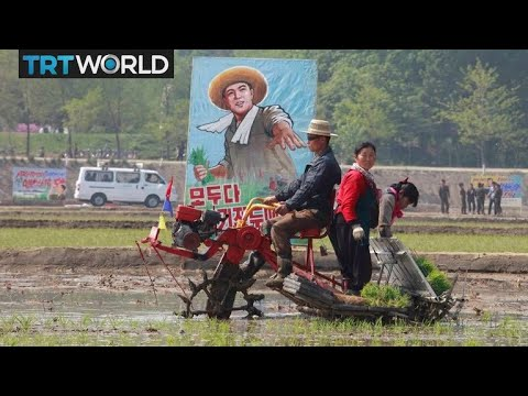North Korea Food Crisis: More than 10M people suffer from food shortages
