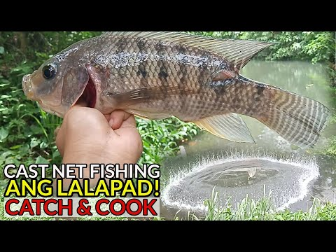 "ep42---cast-net-fishing-""pang-dadala""-malalapad-na-tilapia-(catch-&-cook)---san-pablo-city,-laguna"