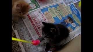 2014年4月18日, 我家の車庫に不法侵入(?)をした野良猫が子猫を産みまし...