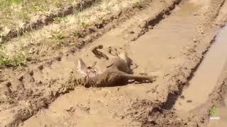 Самое любящее существо на свете - это мокрая собака