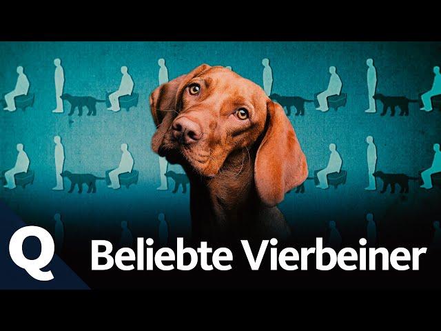 Hunde: Haustier, Helfer und Familienmitglied (Ganze Folge) | Quarks