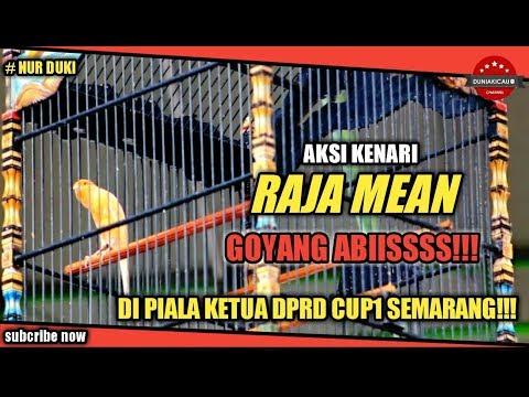 Download Lagu Aksi Kenari RAJA MEAN Goyang ABISSS!!!