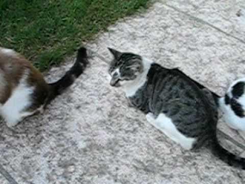 Hitler, Mussolini & Franco Kittens