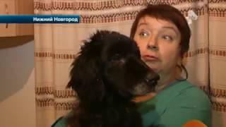 """Зоозащитники обнаружили в Нижнем Новгороде """"концлагерь"""" для собак"""