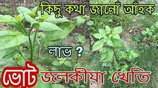 ভোট জলকীয়া খেতি কৰোঁ আঁহক । লাভ ? Ghost pepper cultivation in Assam /Ghost pepper
