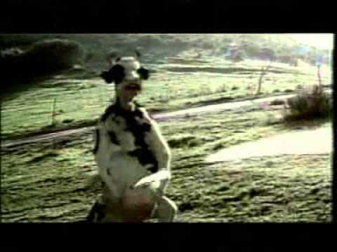 kungfu cow & kungfu man
