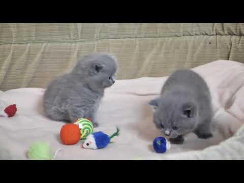 Два котика Ларсон и Людовик