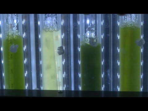 Israeli Scientists Produce Energy From Plants | AFP