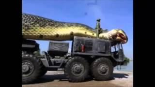 Ular terbesar di dunia ( The worl biggest snake )