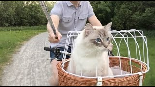 Cats Love a Biking Adventure  Casper enjoys this awesome bike ride