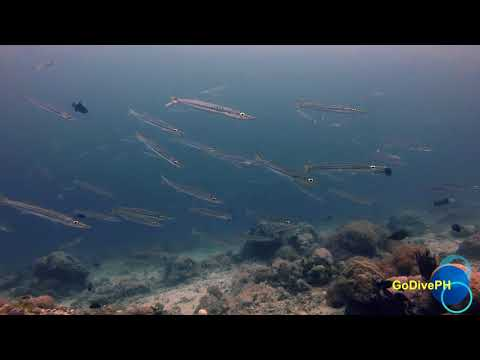 Anilao AOW Adventure Dive