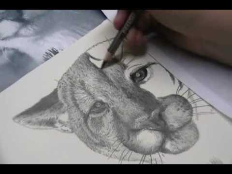 Cougar Head Drawing