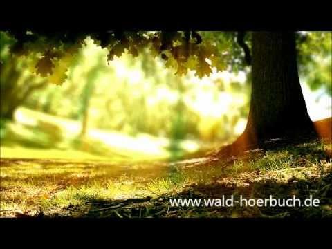 Wenn der Wald spricht 2 - Kapitel 07 - Außen & Innen