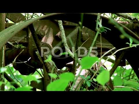 Antique Farm Equipment Abandoned In Forest Close Up 2 Stock Footage