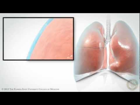 Pleural Space [HD]