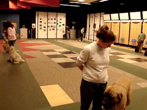 Heeling and training at obedience class