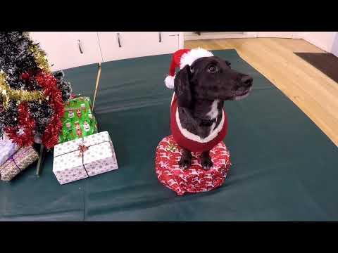 Christmas tricks - Saturday classes