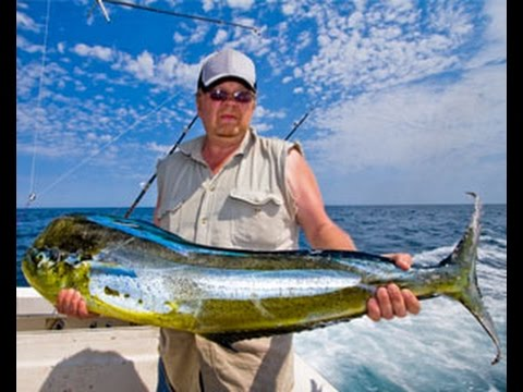 Deep sea fishing jacksonville fl charters jacksonville for Deep sea fishing jacksonville