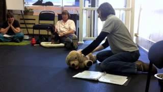 Chicago School Of Canine Massage: Massage Techniques - Effleurage