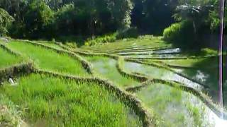 Sri Lanka,ශ්රී ලංකා,Ceylon,Beautiful Rice Paddy Terraces (01)