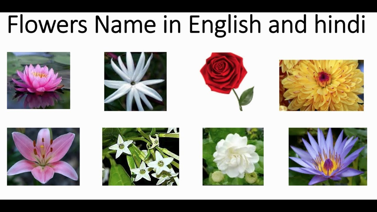 Indian Flowers Name In Hindi And English With Pictures Learning