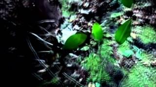 Bjork - Human Behaviour (Subtitulado Al Español)