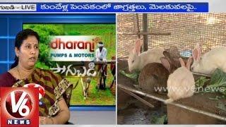 Rabbit Raising - Veterinary Prof. Amareshwari - Sagubadi