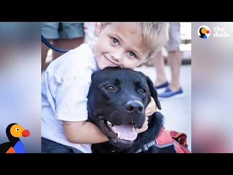 Amazing Dog Changes Everything For Boy With Diabetes - LUKE & JEDI | The Dodo