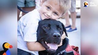 Amazing Dog Changes Everything For Boy With Diabetes - LUKE & JEDI | The Dodo