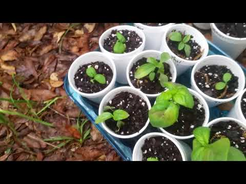 2018 Seedling Starts for new Food Forest