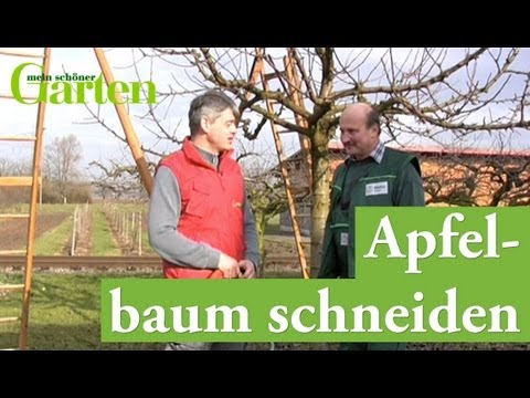 gartentipp apfelbaum schneiden youtube. Black Bedroom Furniture Sets. Home Design Ideas