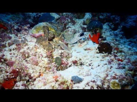 Maldives Diving Safari December 2015 movie