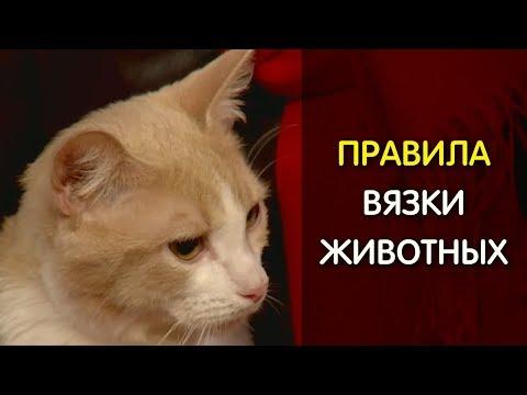 Как правильно вязать кошек