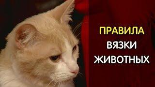 Правила вязки кошек и собак
