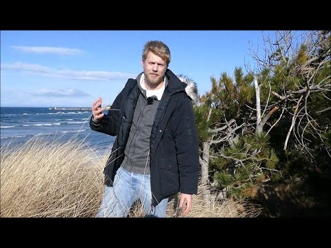 Documentary, Sand Dune Succession From Beach To Forest (Scotland)