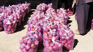 بازار: انتقاد بازرگانان میوههای تازه از حکومت